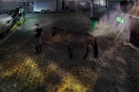 Cheval musée maja