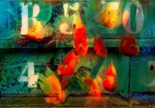 conteiner-poissons